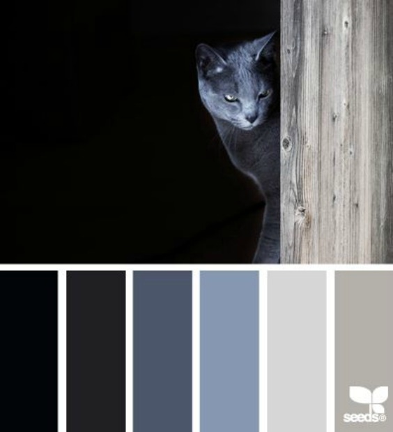 design-seeds-cat-tones